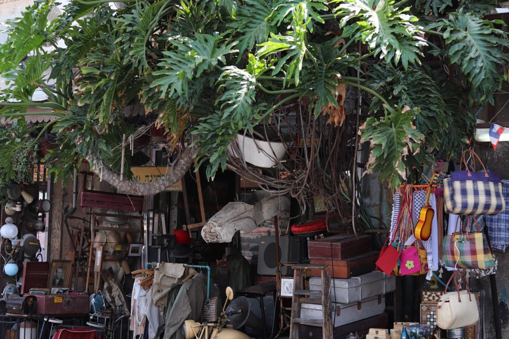 A plant growing out of a wall over a stall at Jaffa Flea Market